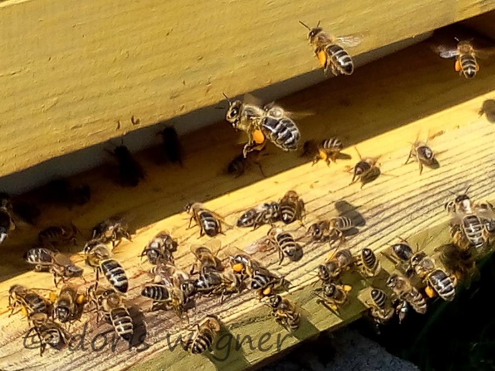 Pollen eintragen