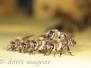 Bienen daheim