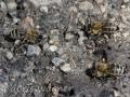 Bienen am Wasser_1