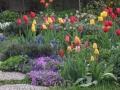 Tulpenbeet_1
