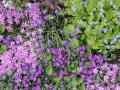 Blütenpolster