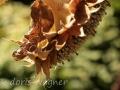 Sonnenblume_10