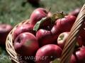 Äpfel_2