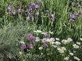 Zierlauch und Iris