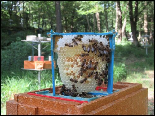 Juli 2019 – Queen Bee